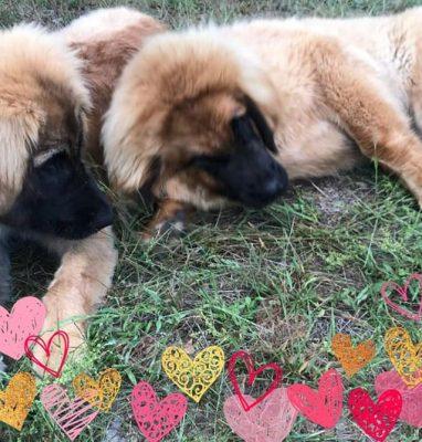 Aura&Angel/Lenka